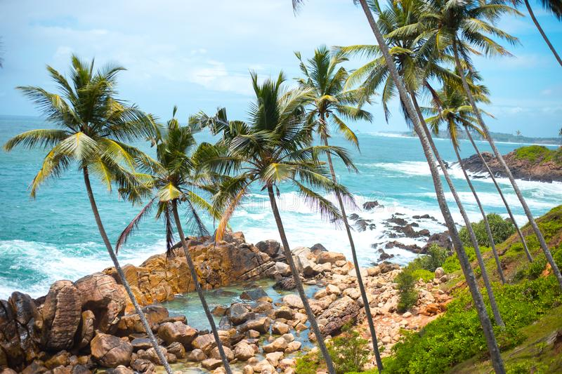 Long thin palm trees over the shore of the ocean. colorful asia landscape. tropical plants blue sky stock photo