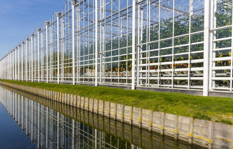 Long Tomato Greenhouse in Maasdijk stock photography