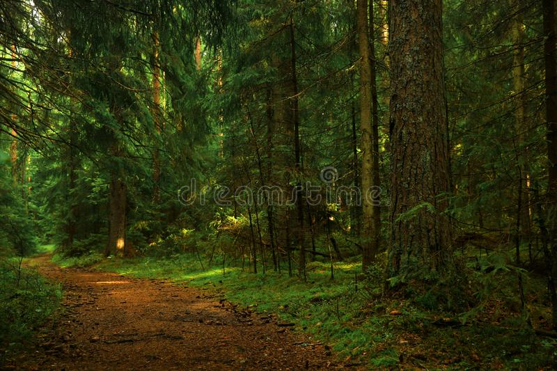 Long walks in the forest are great stock photo
