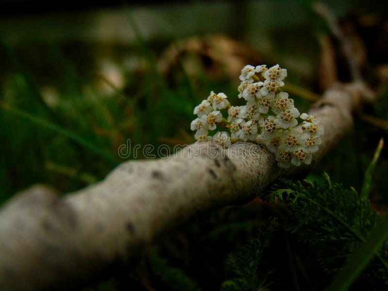 Long way to the flower. White, stick, forest, grass, morning stock photo