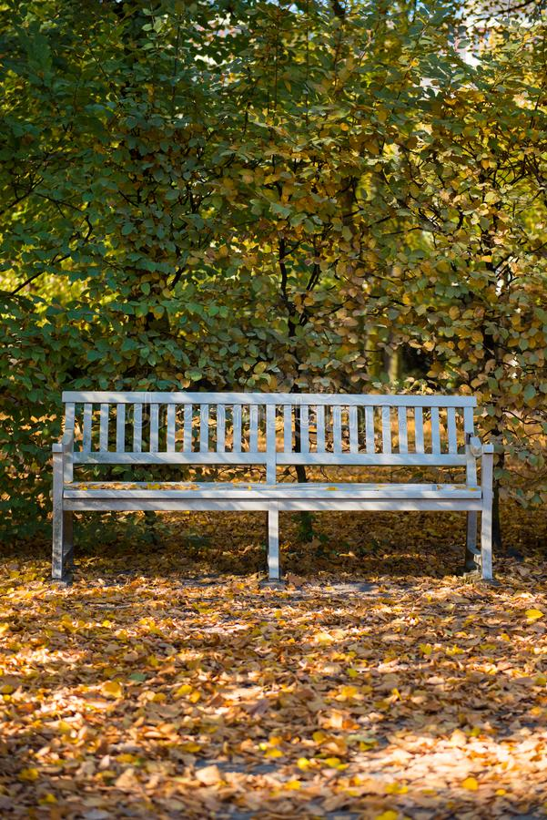 Long white chair in front of forest in autumn royalty free stock images