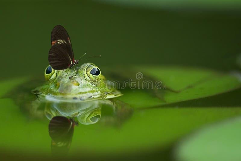 Long Wing Butterfly On Frog Head Soak On Water Free Public Domain Cc0 Image