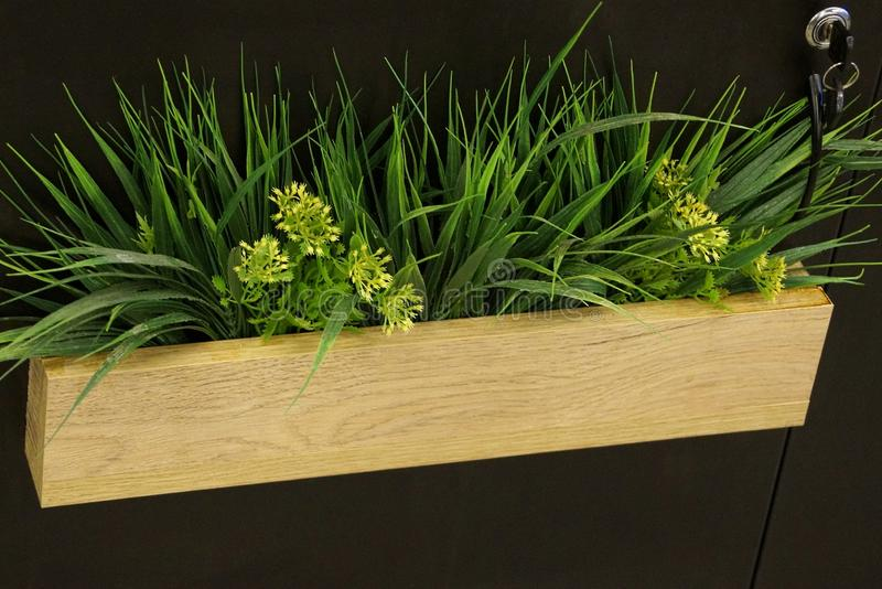Long wooden brown pot with decorative green grass and flowers on the wall in the room royalty free stock photography
