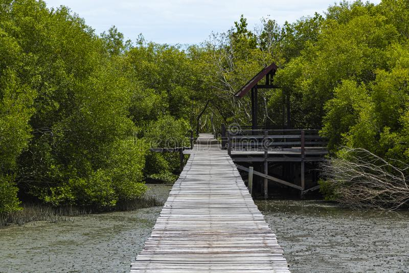A Long wooden pathway on the sea to Mangrove forest background.  stock photography