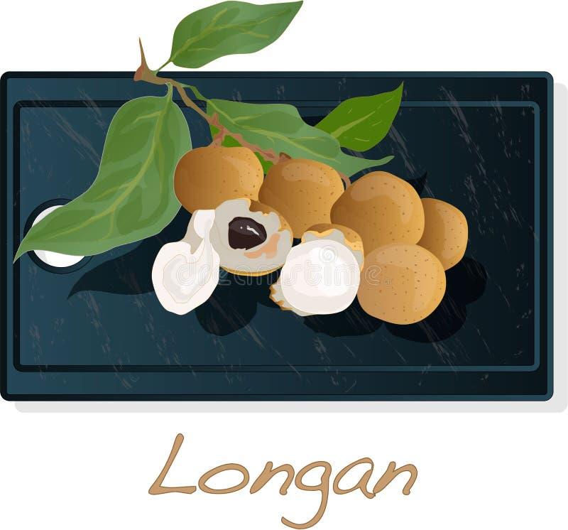 Longan, Dimocarpus Longan Longanvektorillustration auf Teller lokalisiertem weißem Hintergrund vektor abbildung