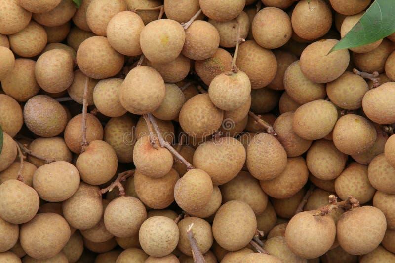 Longan tropisk frukt arkivfoton
