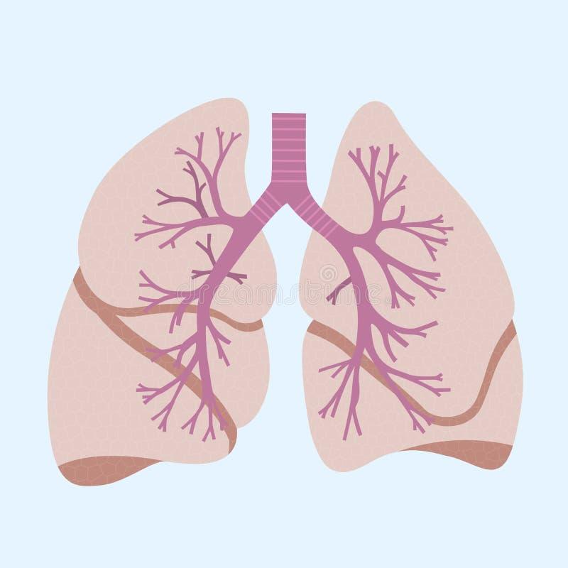 longen royalty-vrije illustratie