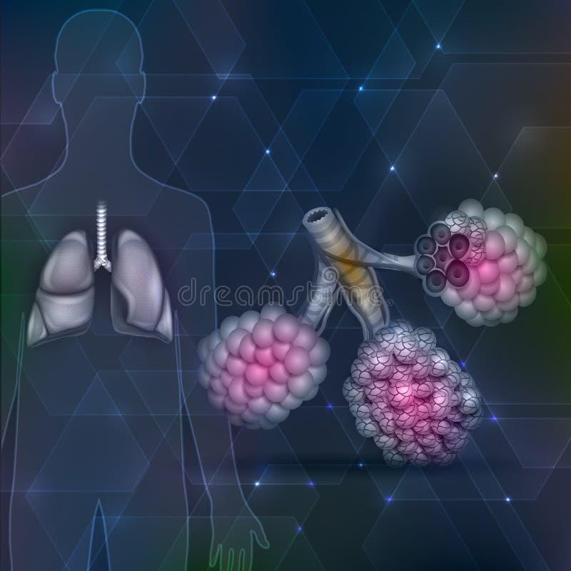 Longen en alveolen royalty-vrije illustratie