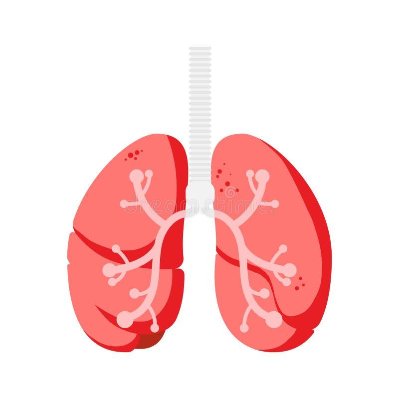 Longen, intern het lichaamsdeel zenuwstelsel van de organenanatomie vector illustratie
