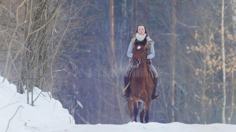 Longhaired female rider wild and fast riding black horse through the snow. Telephoto shot stock images