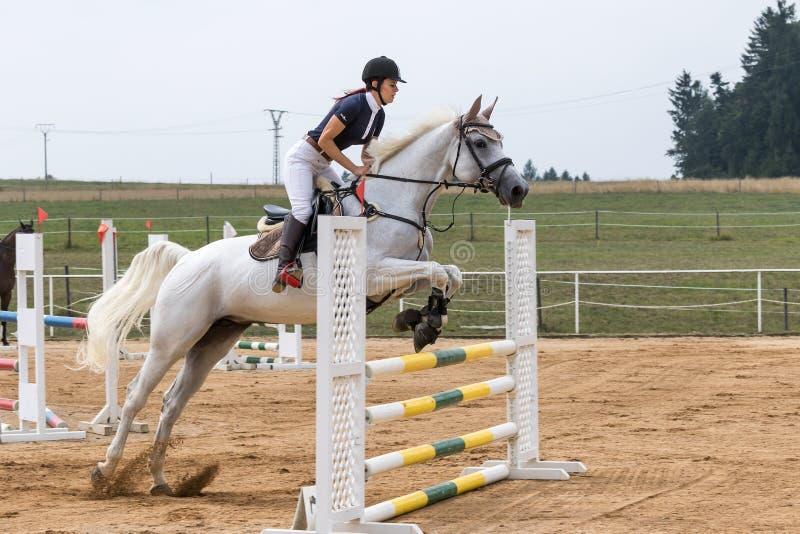 Longhaired härlig skicklig ryttarinna på en vit häst royaltyfria foton