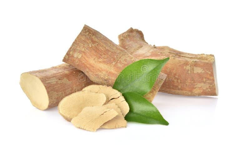 Longifolia de Eurycoma no fundo branco imagem de stock royalty free