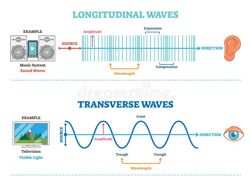Longitudinal and Transverse wave type, vector illustration scientific diagram. Sonic and visual perception principle. stock illustration