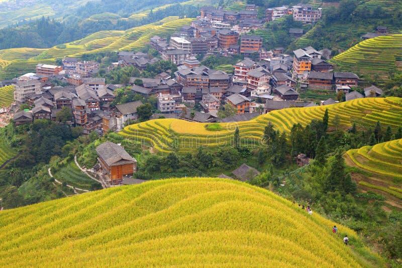 Longji riceterrasser arkivfoto