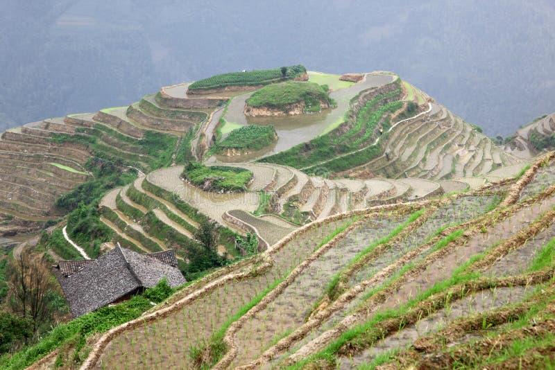 Longji riceterrasser, Guangxi landskap arkivbild
