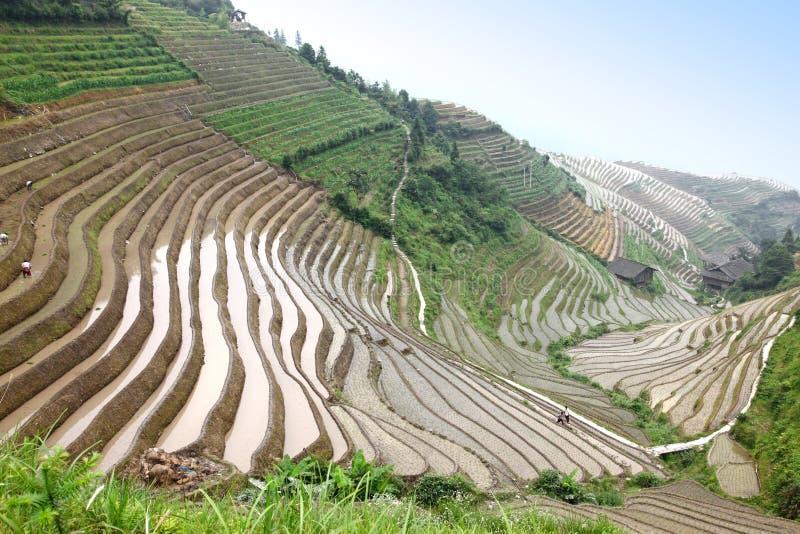 Longji ris terrasserar UNESCOplatsen, Kina royaltyfri bild