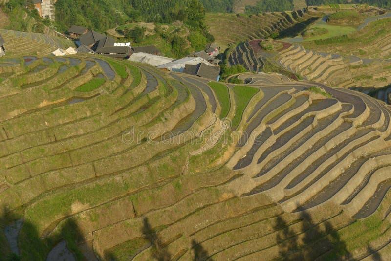 Longji risterrasser, Guangxi landskap, Kina arkivfoton
