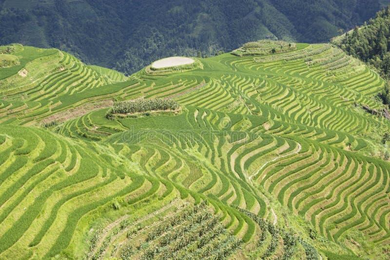 Download Longji Terraced Rice Fields Stock Image - Image: 10566611
