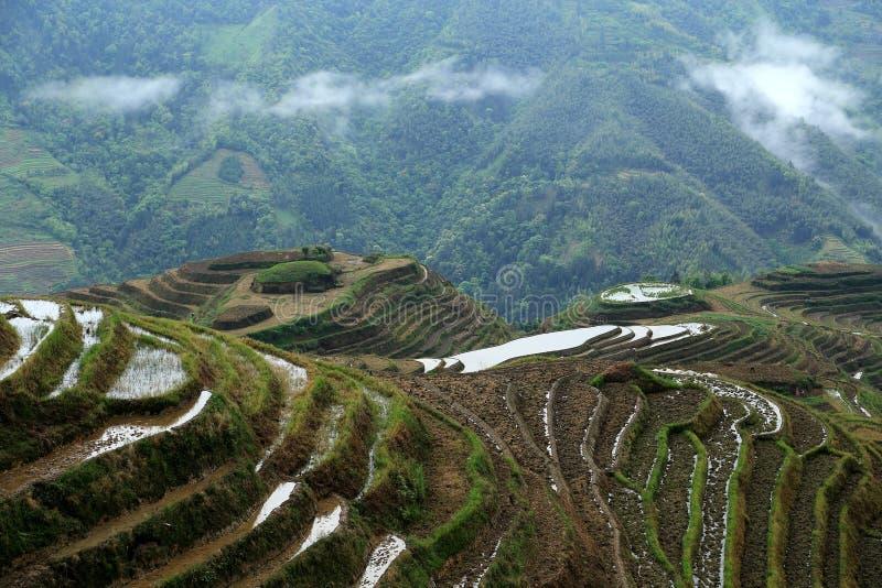 Longji terrass, guangxi, porslin royaltyfri foto