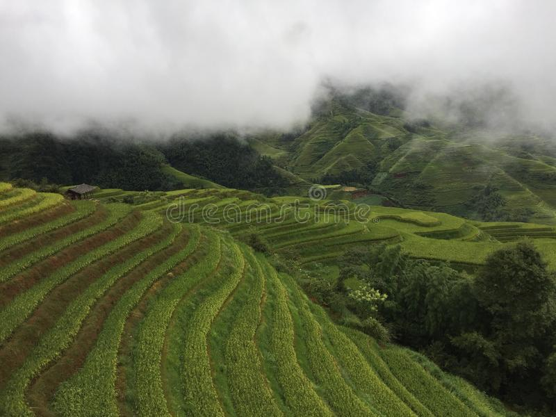 Longji terrassfält fotografering för bildbyråer