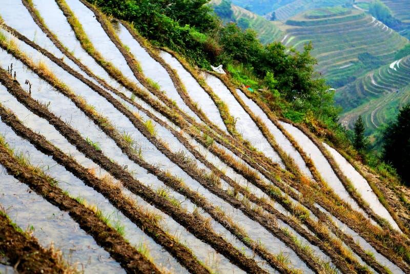 Longji terrassrisfält arkivbilder