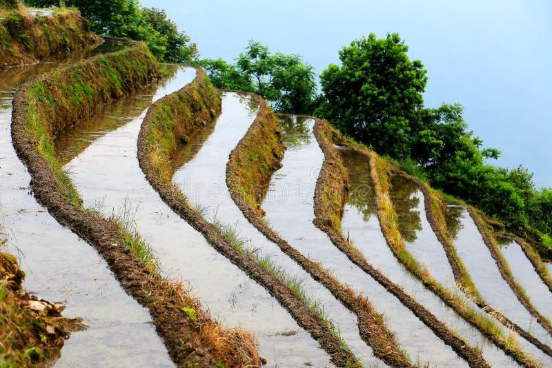 Longji terrassrisfält arkivbild