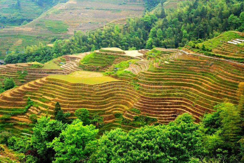 Longji terrassrisfält arkivfoton