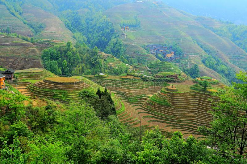 Longji terrassrisfält fotografering för bildbyråer