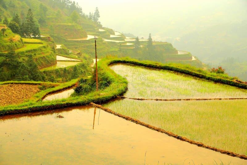 Longji terrassrisfält royaltyfri foto