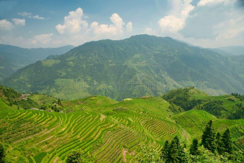 Longjie's鲜绿色米大阳台和周围的山美丽的景色  免版税库存图片