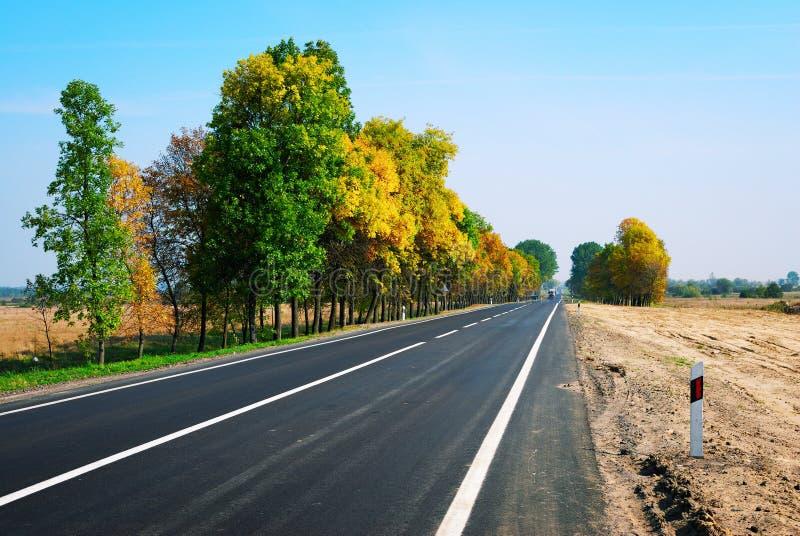 Longs arbres de route goudronnée et d'automne photographie stock