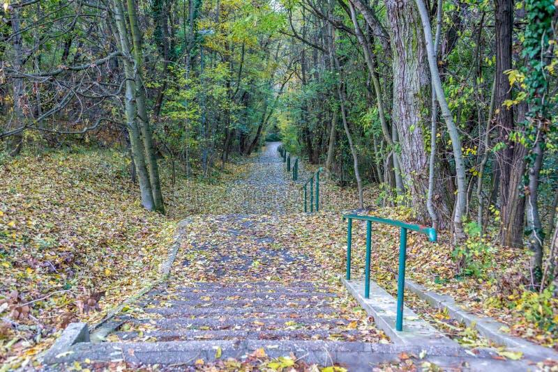 Longs escaliers concrets en parc forrest à l'automne couvert par les feuilles colorées photos libres de droits