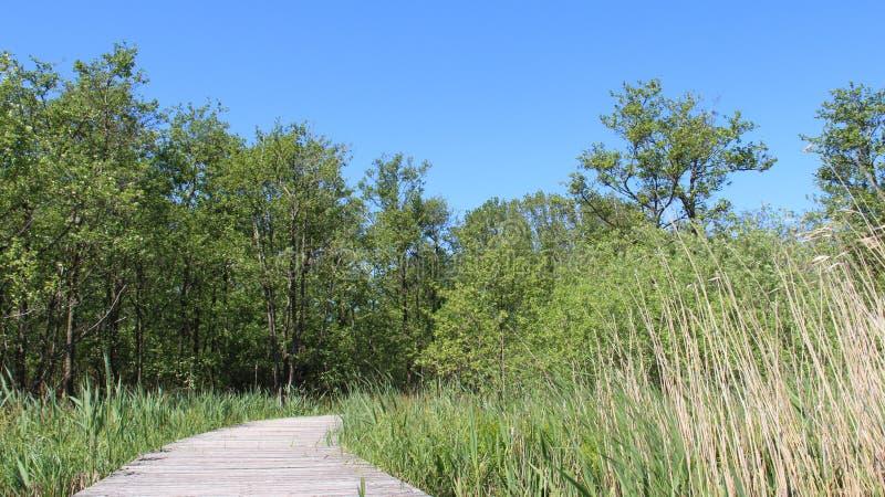 Longs pont en bois et marécage avec le soleil chaud photographie stock