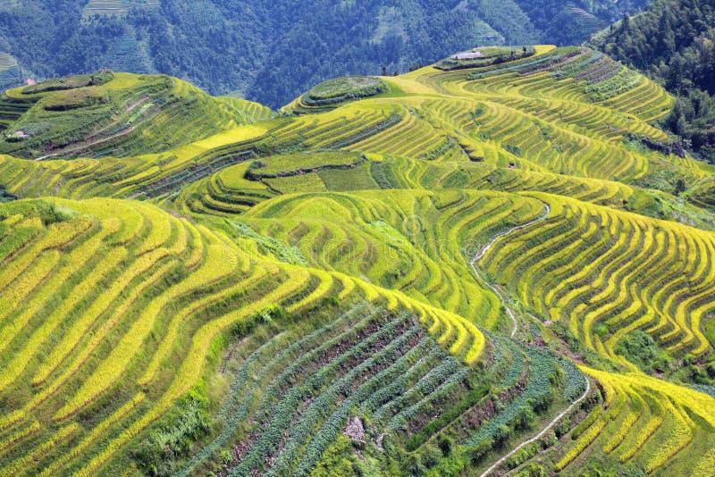 Longshen Rice Fields III stock photo