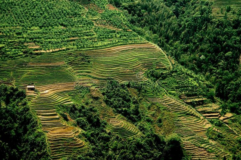 Download Longsheng, China: Terraced Rice Paddies Stock Image - Image: 26511643