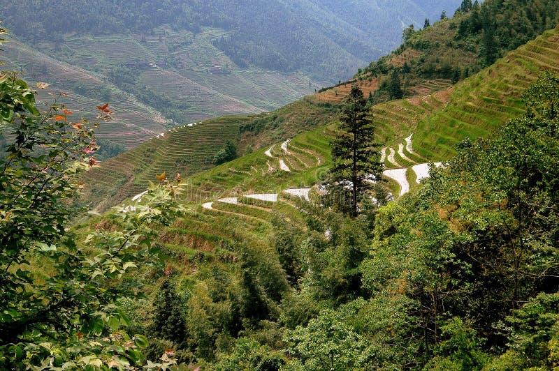 Download Longsheng, China: Terraced Rice Paddies Royalty Free Stock Photos - Image: 26511718