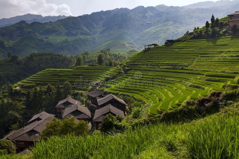 Longsheng för den härliga sikten ris terrasserar nära av den Dazhai byn i landskapet av Guangxi, Kina royaltyfria bilder
