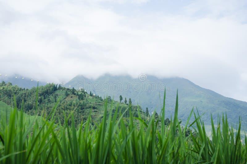 Longsheng län av för Longji för Guangxi landskapkines sceniskt område terrass arkivbild