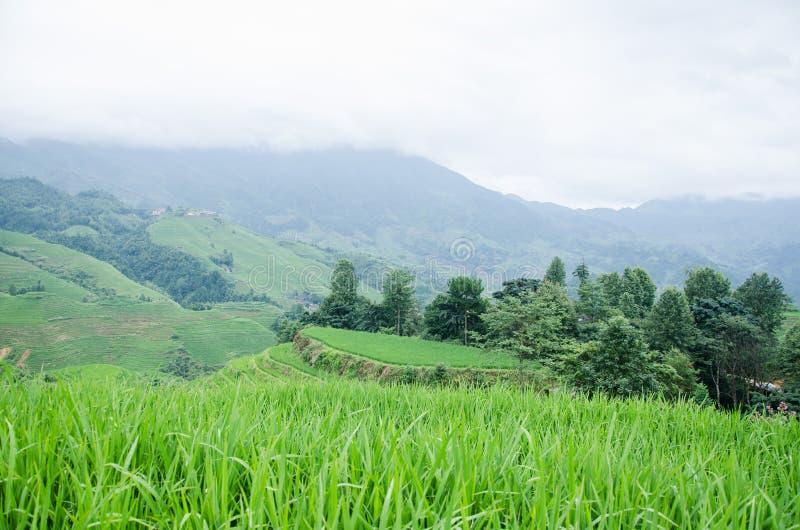 Longsheng län av för Longji för Guangxi landskapkines sceniskt område terrass royaltyfria foton