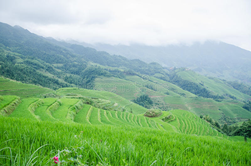 Longsheng län av för Longji för Guangxi landskapkines sceniskt område terrass arkivbilder