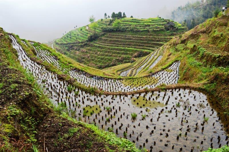 Longsheng Rice Terraces. Longsheng Longji Rice Terraces dragons Backbone, Guangxi, near Guilin stock photography