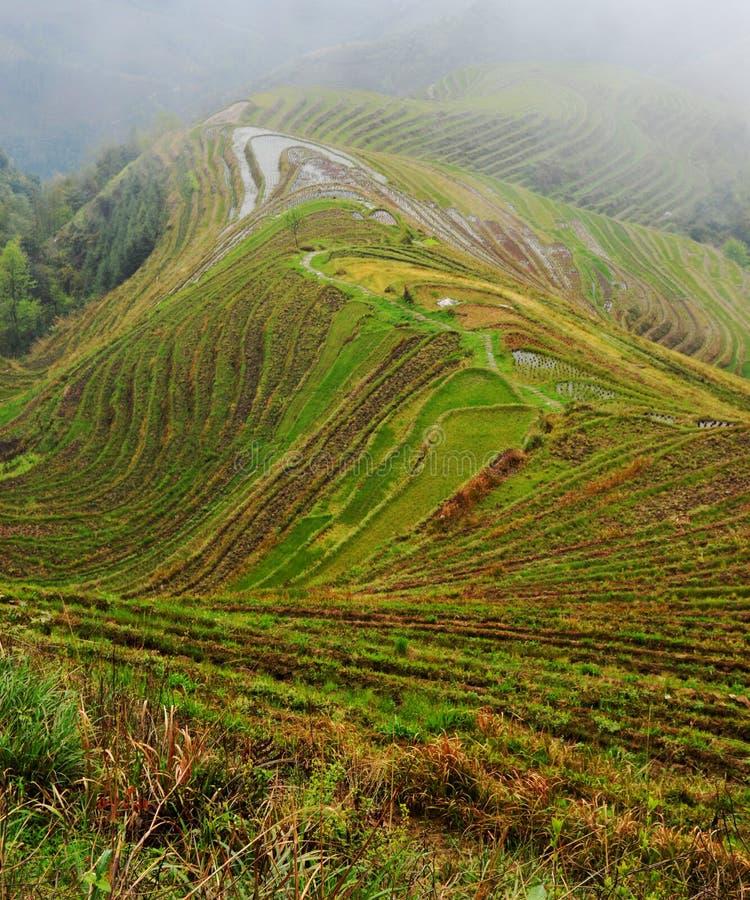 Longsheng Rice Terraces. Longsheng Longji Rice Terraces dragons Backbone, Guangxi, near Guilin royalty free stock images