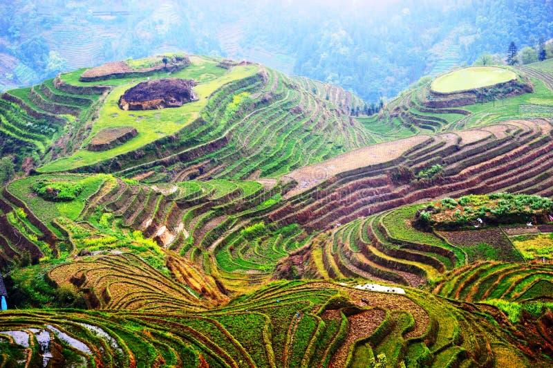 Longsheng Riceterrasser royaltyfri foto