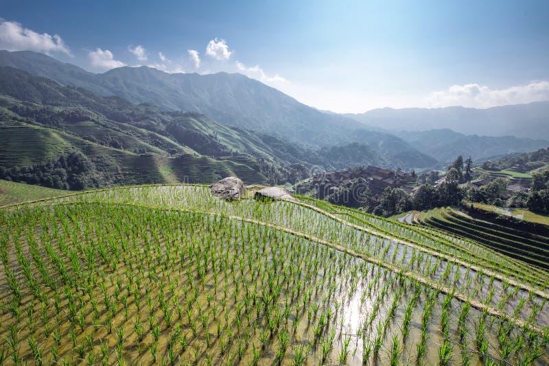 Terraced fields. Longsheng terraced fields in guangxi china royalty free stock photos