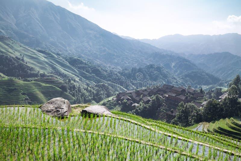 Terraced fields. Longsheng terraced fields in guangxi china royalty free stock photo