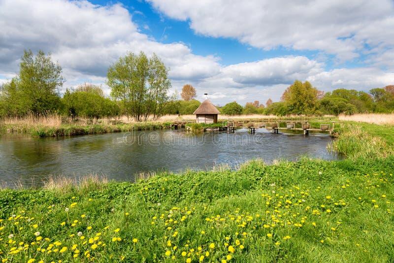 Longstock ålfällor på flodprovet fotografering för bildbyråer
