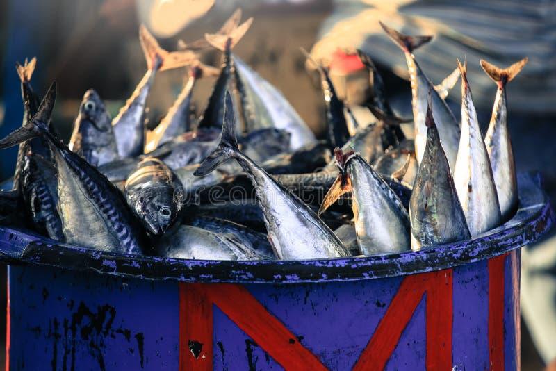 Longtail-Thunfisch auf dem Korb für Verkauf im Fischmarkt in Bali lizenzfreie stockbilder