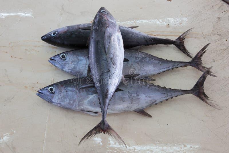 Longtail-Thunfisch auf einem Markt stockfotografie