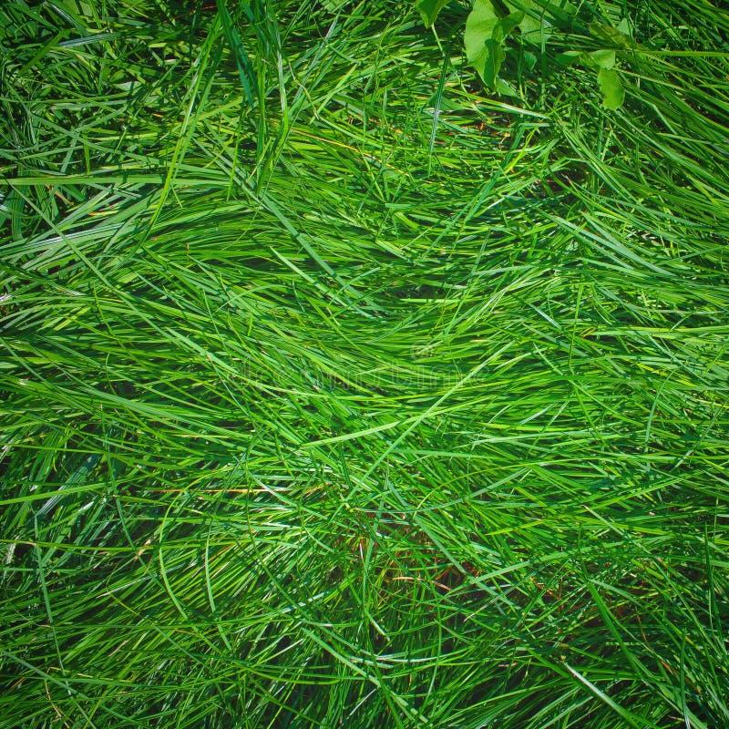 Longue herbe riche verte de pelouse photos libres de droits