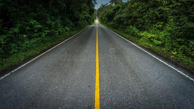 Longue route en parc national tropical photo libre de droits